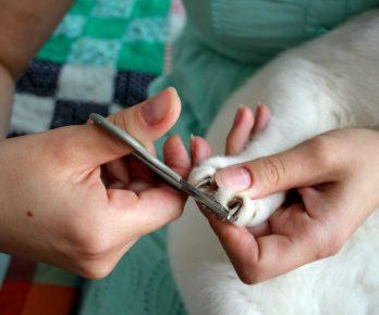 Стрижка кошачьих коготков