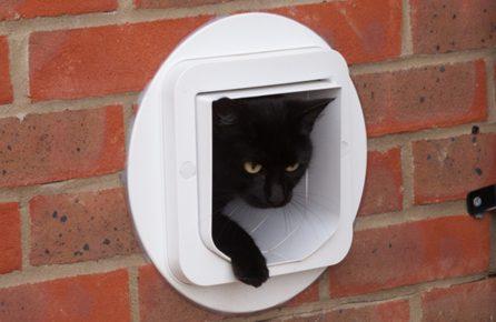 Дверь для кошки в стене