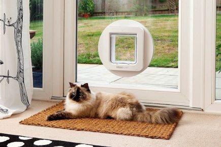 Дверца для кошки в стеклянной двери