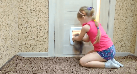 Обучение кошки пользоваться дверцами