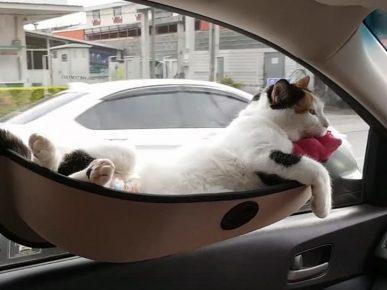 узкий гамак на присосках с лежащей в нём кошкой закреплён к стеклу дверцы автомобиля