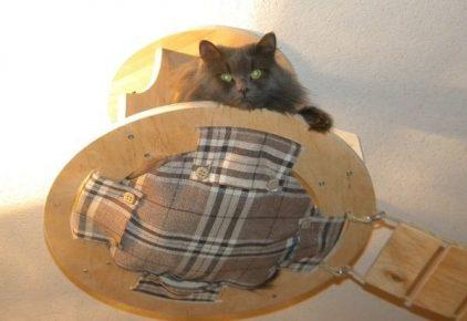 круглый гамак на деревянном каркасе с выглядывающим чёрным котом прикреплён к потолку, являясь частью игрового комплекса