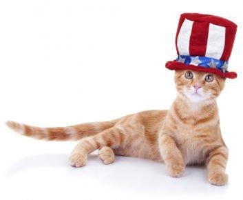 Кот в шляпе с национальной символикой США