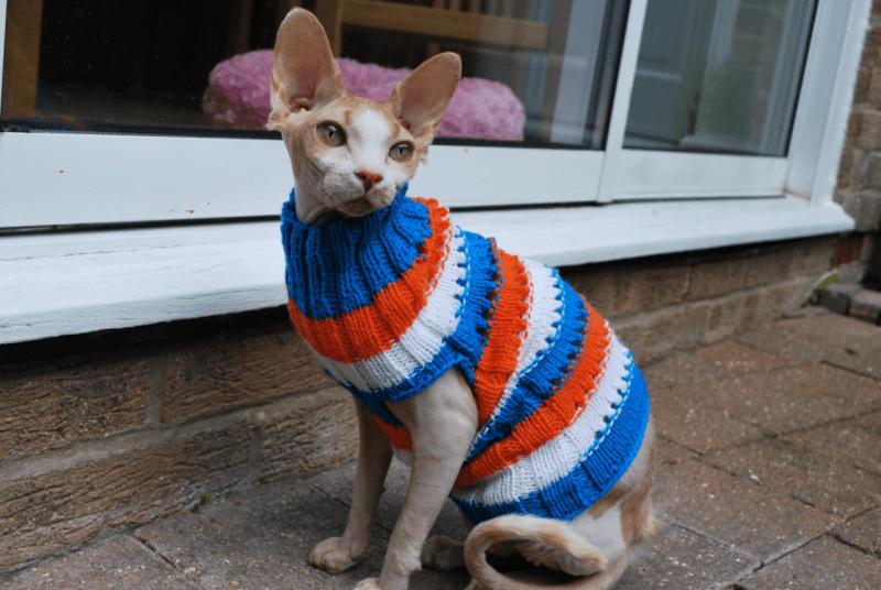 Как изготовить своими руками одежду для кошек