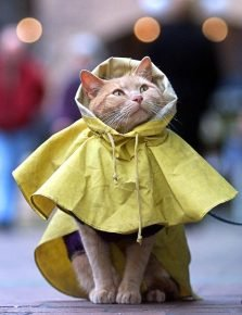 Кошка в плаще