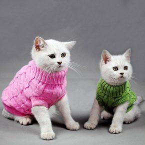 Котята в свитерах