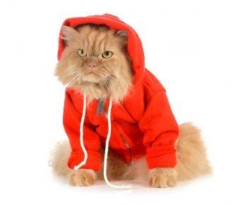 Рыжий кот в оранжевом пальто