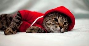 Кот в капюшоне