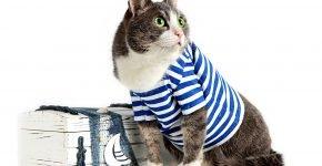 Кот в тельняшке