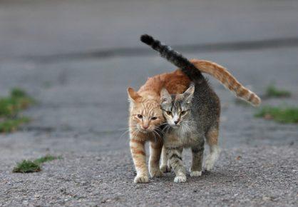 Уличные коты жмутся друг к другу