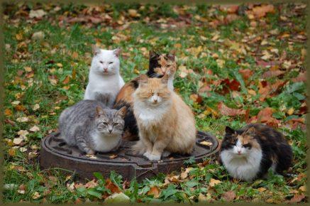Бездомные коты на колодце