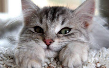 Лёгкий прищур у кошки