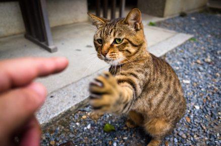 Кошка трогает хозяина лапой