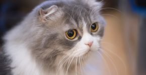 Усы грустной кошки