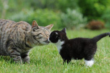 Общение кошек между собой