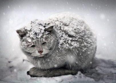 Замёрзший кот