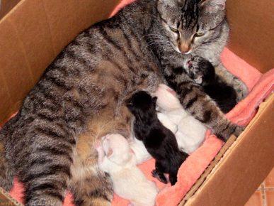 Новорождённые котята с мамой в коробке