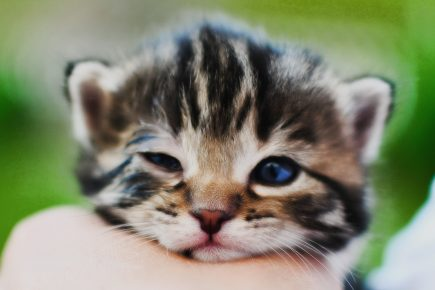 Котёнок с открытыми глазками