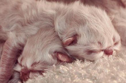 Два новорождённых котёнка спят