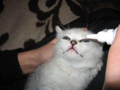 Белому котёнку закапывают лекарство в глазки