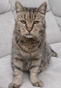 Самый старый кот