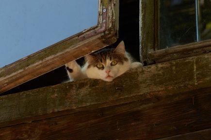 Кот выглядывает из открытого окна