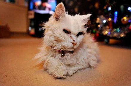 Кошка Блэки