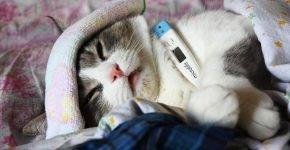 Кот с градусником и полотенцем на лбу