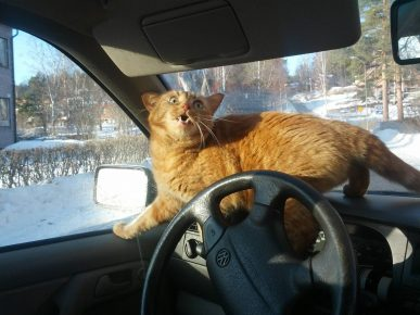Кошка, запертая в машине