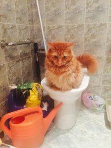 Мейн-кун сидит на унитазе в туалете