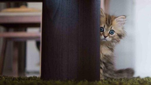 Маленький котёнок боится
