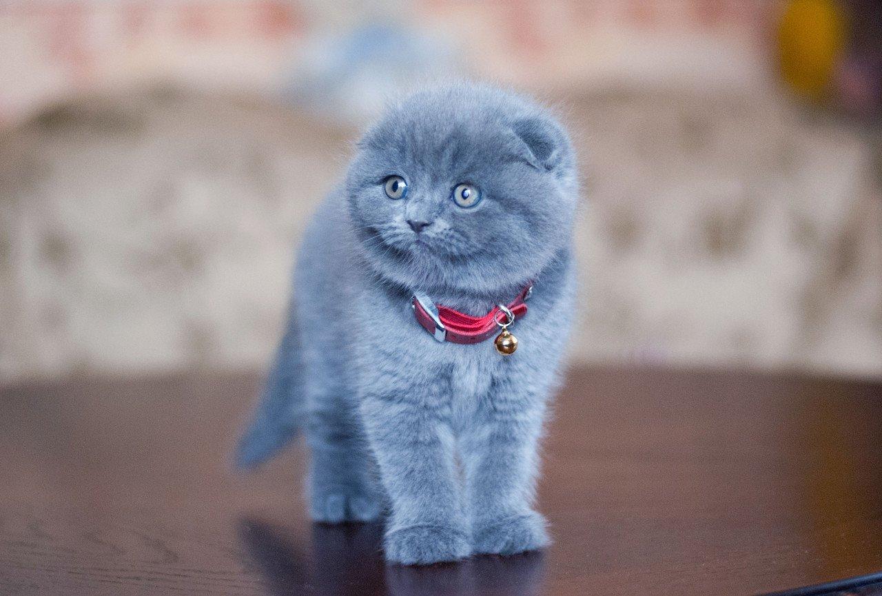 Как ухаживать за котенком? Уход за маленьким котенком