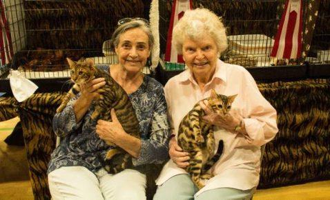 Женщины держат кошек на руках