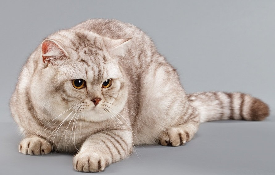 просмотре британские коты окрасы фото берегу моря расположено