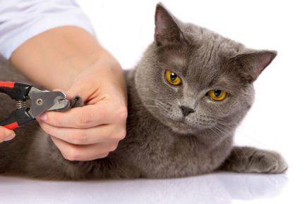 Стрижка когтей у кота