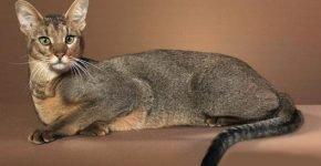 Красивая кошка на коричневом фоне