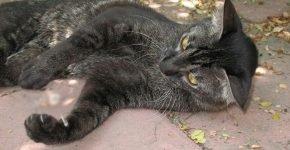 Кошка лежит и играет