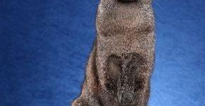 Сидящая кошка на синем фоне
