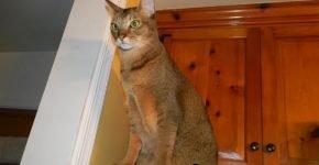 Кошка сидит на холодильнике