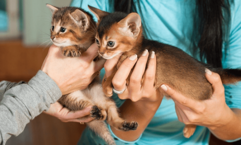 Маленькие котята на руках