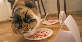 Кошка дегустирует колбасу