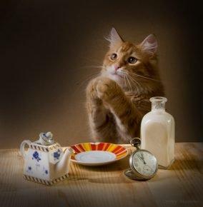 Кошка сидит за столом, сложив лапы