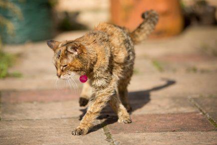 Старая кошка на улице