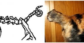 Хвост кошки на схеме