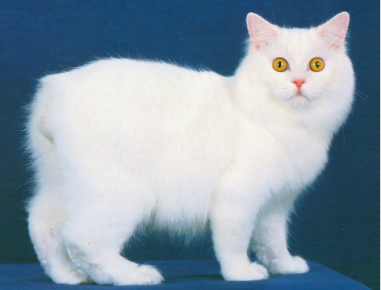 Белый кимрик