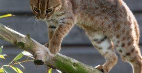 Кот со ржавыми пятнами на ветке дерева