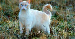 Кошка в поле
