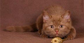 Кошка и конфета