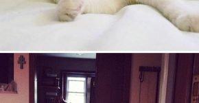 Кошка с бровками