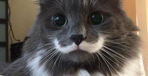 Кот с «усами»